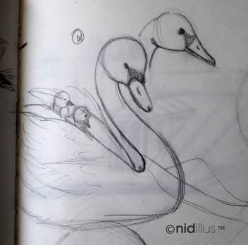 2018-09-14 cygne nidillus